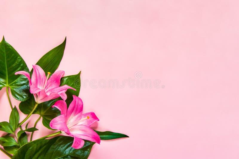 La configuration plate des fleurs et du vert de lilium part au-dessus du backgroung rose Copiez l'espace photos stock