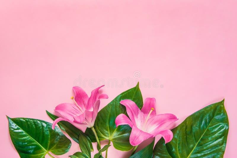 La configuration plate des fleurs et du vert de lilium part au-dessus du backgroung rose Copiez l'espace images libres de droits