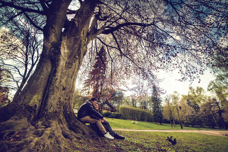 La coppia si siede sotto l'albero sul tramonto fotografia stock libera da diritti
