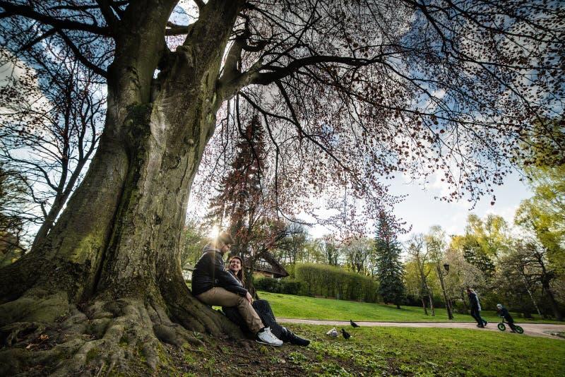La coppia si siede sotto l'albero sul tramonto immagini stock libere da diritti