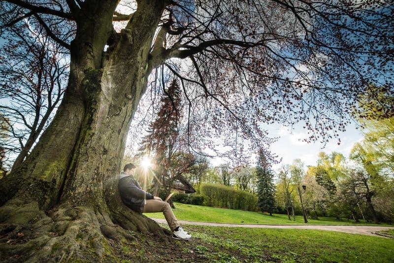 La coppia si siede sotto l'albero sul tramonto immagine stock
