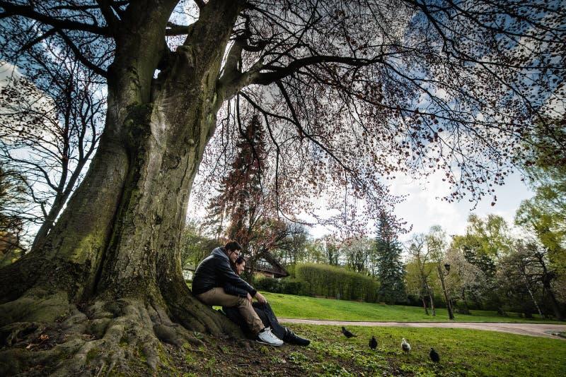 La coppia si siede sotto l'albero sul tramonto fotografia stock