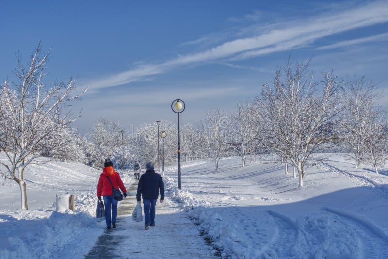 La coppia sta camminando nel parco dell'inverno immagini stock