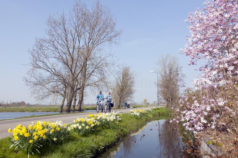 La coppia sulla bicicletta passa i fiori nel cuore verde dell'Olanda fotografia stock libera da diritti