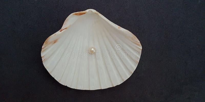 La coquille et la perle de mer avec le fond texturisé noir wallpaper, photos libres de droits
