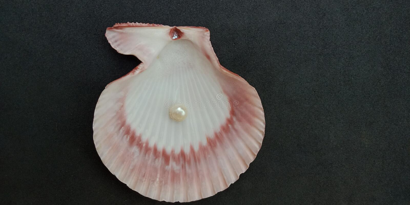 La coquille et la perle de mer avec le fond texturisé noir wallpaper, image libre de droits