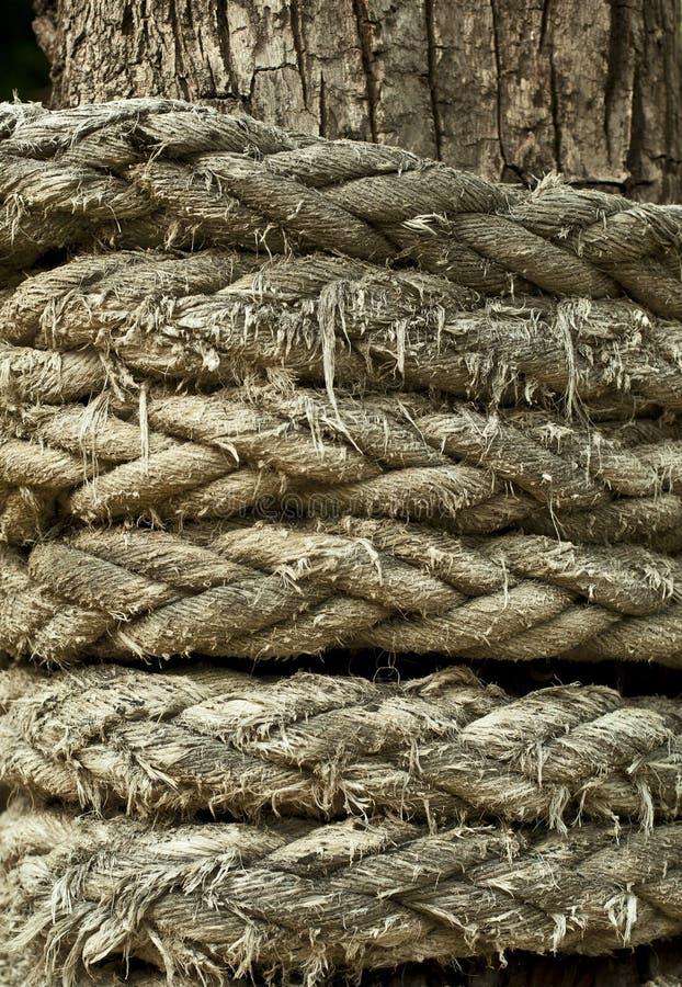 La corda si è arrotolata intorno all'albero fotografia stock libera da diritti