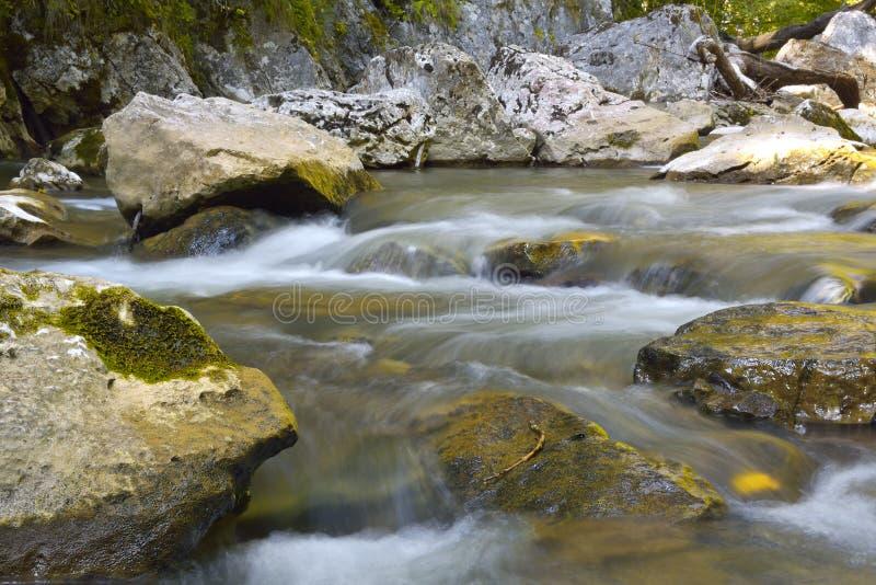 La corrente lenta in una foresta ha decorato nei colori di caduta fotografia stock libera da diritti