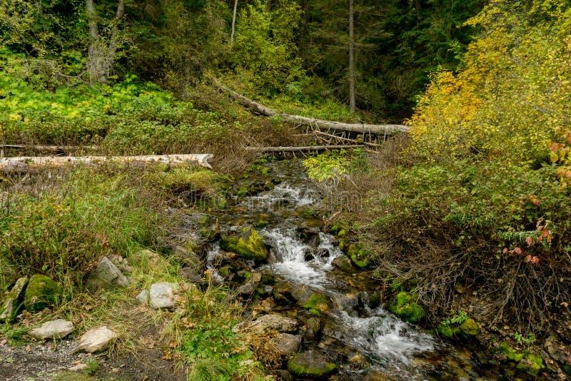 La corriente atraviesa las montañas de Utah en otoño foto de archivo libre de regalías
