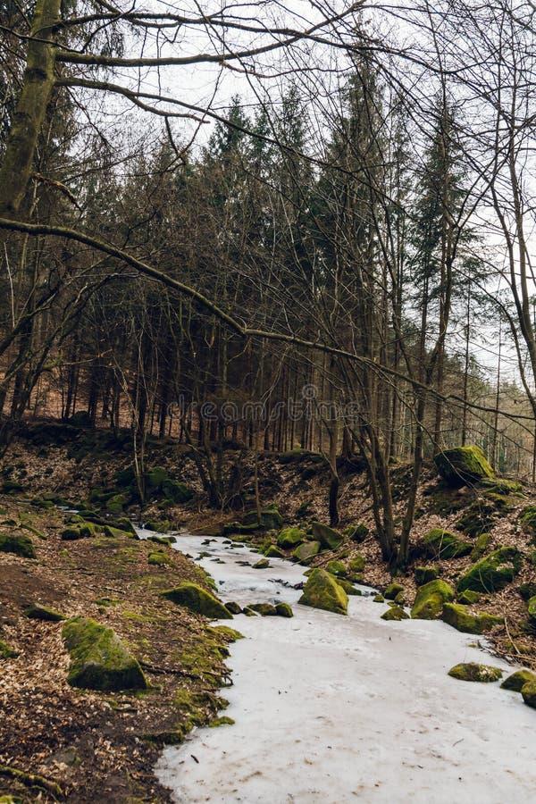 La corriente congelada en árboles viejos grandes de un bosque profundo crece alrededor foto de archivo libre de regalías