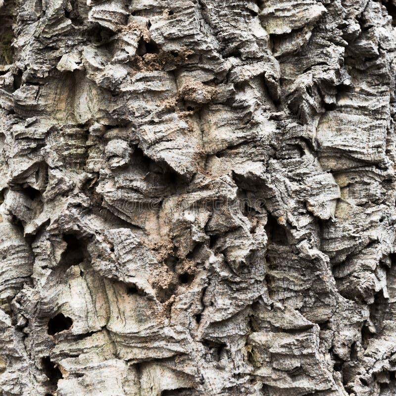 La corteccia dell'albero di sughero fotografie stock