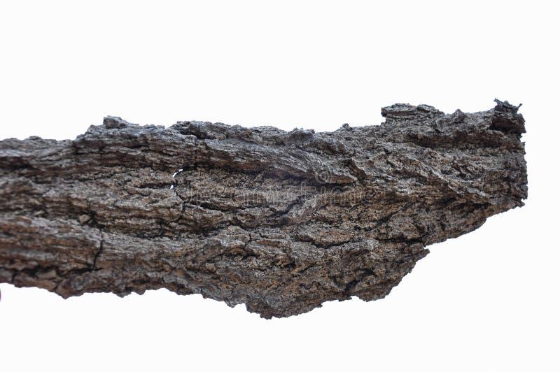 La corteccia di albero con le belle strutture ha isolato il fondo bianco fotografia stock libera da diritti