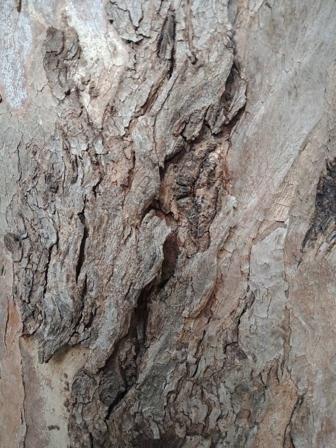 La corteccia di albero ha strutturato il fondo, carta da parati del paesaggio della natura fotografia stock