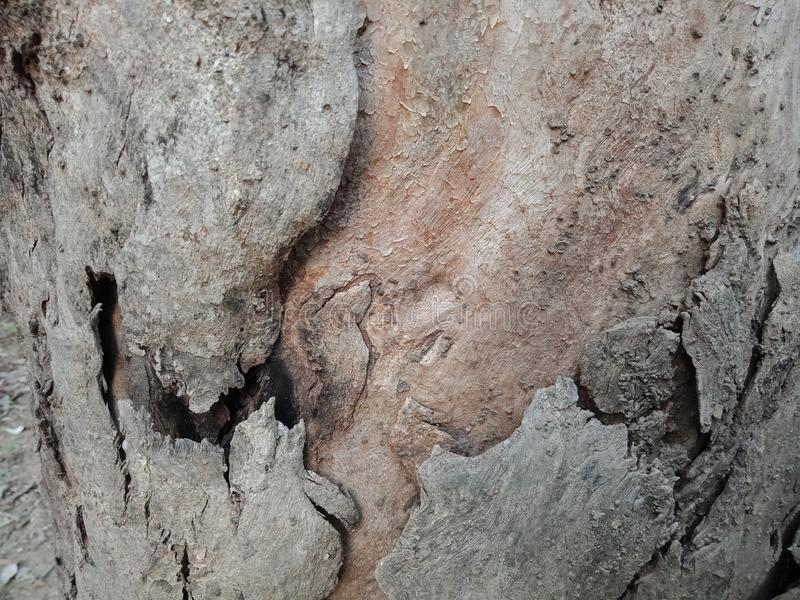 La corteccia di albero ha strutturato il fondo, carta da parati del paesaggio della natura fotografie stock