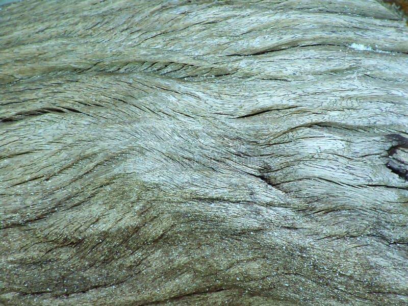 La corteza de la desintegración del eucalipto foto de archivo