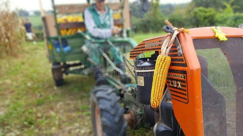 La cosecha de maíz es tractor en granja imagen de archivo libre de regalías