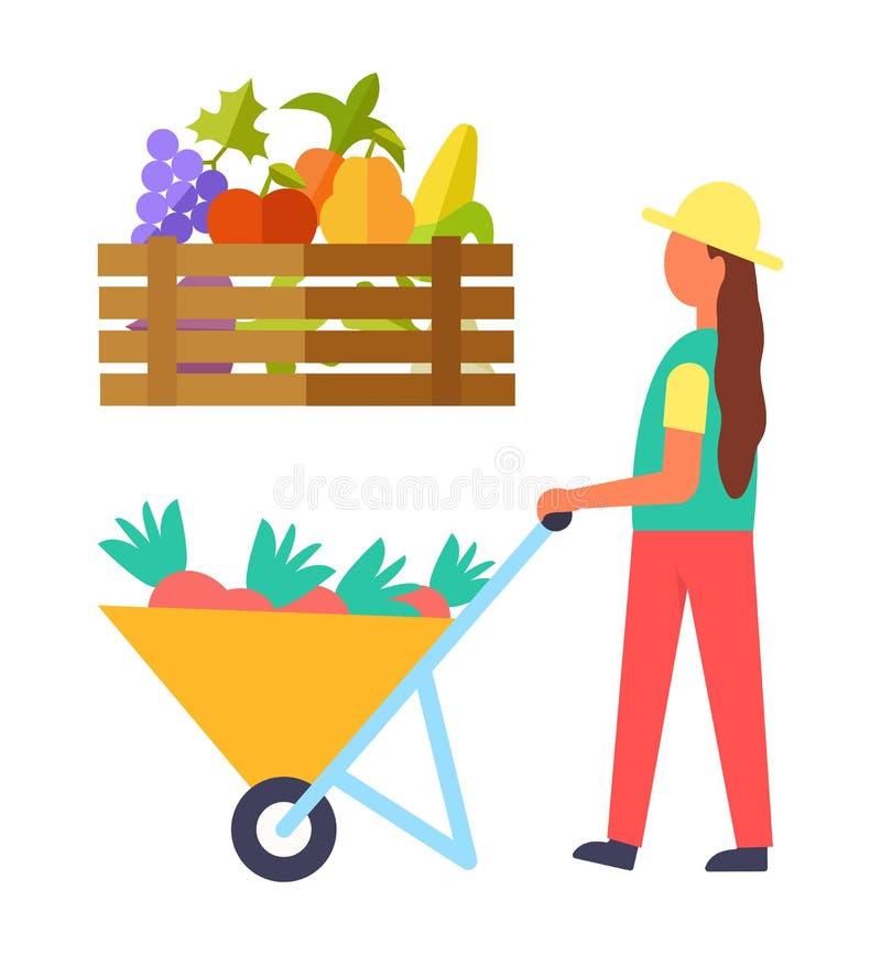 La cosecha que cultivaba a la mujer fijó el ejemplo del vector ilustración del vector