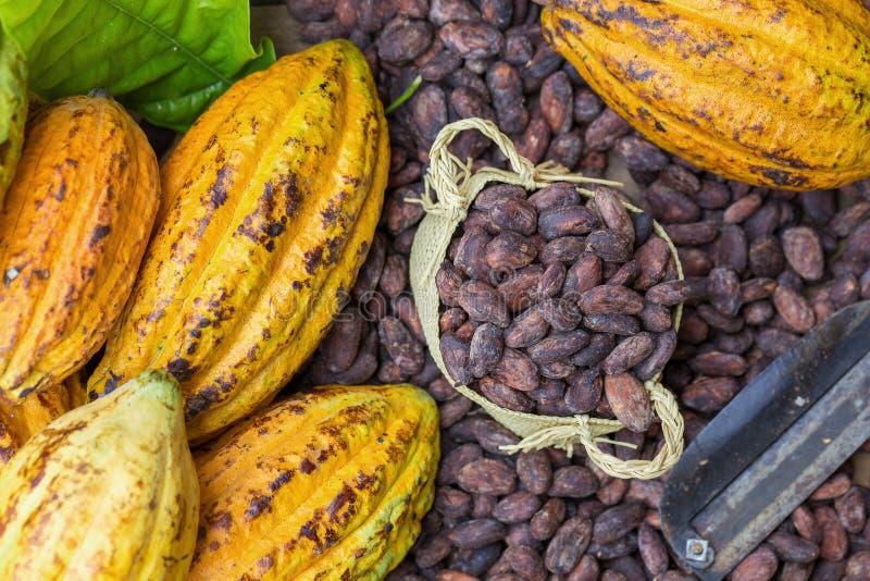 La cosse et les haricots mûrs de cacao ont installé sur le fond en bois rustique photos stock