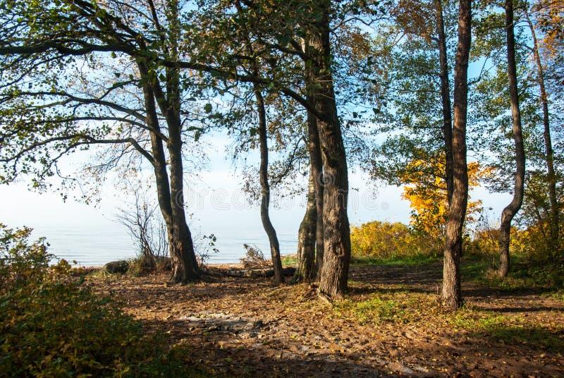 La costa costa del golfo de Finlandia en otoño foto de archivo libre de regalías