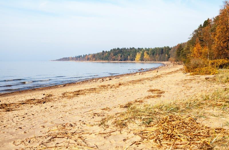 La costa costa del golfo de Finlandia en otoño imagen de archivo