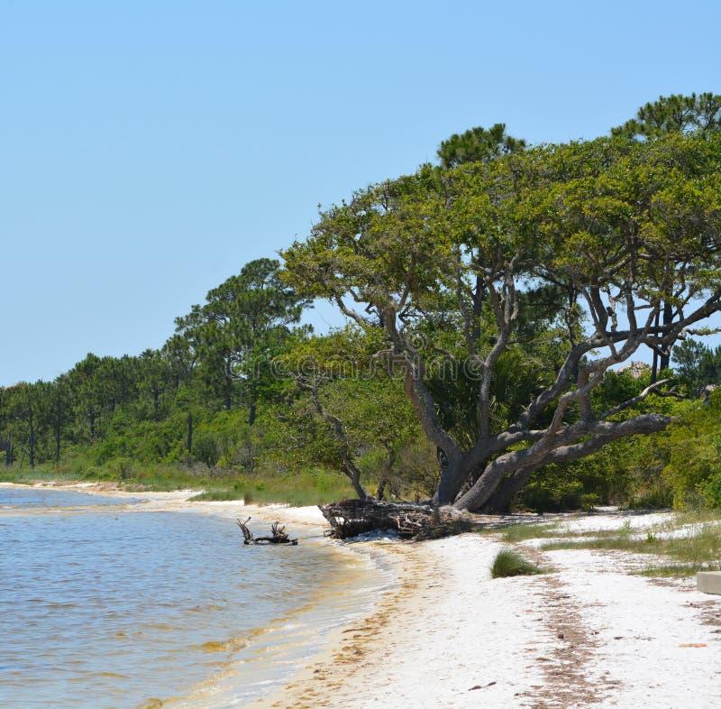 La costa della brezza del golfo in Santa Rosa County Florida sul golfo del Messico, U.S.A. fotografia stock libera da diritti