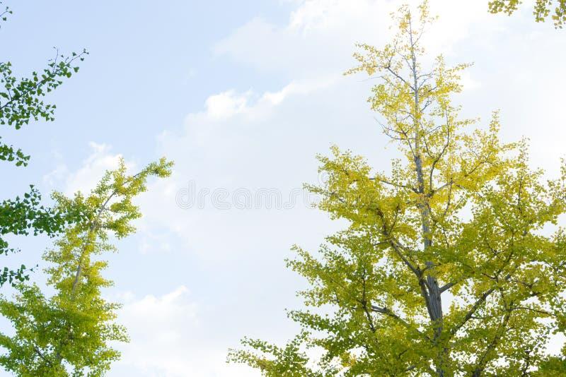La couleur de feuilles d'automne commencent le changement du Japon image libre de droits