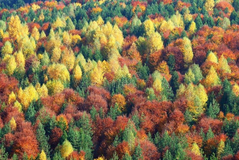 La couleur de l'automne. photos libres de droits