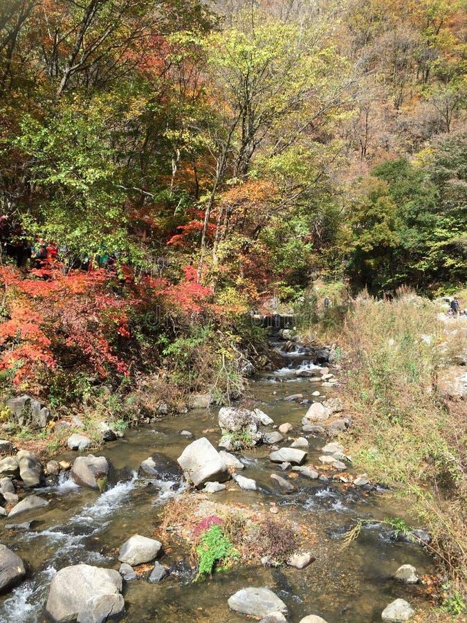 La couleur de l'automne, courant doux photo libre de droits
