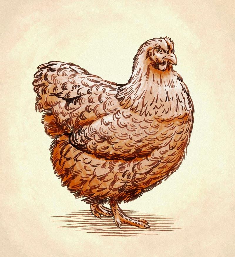 La couleur gravent l'illustration d'isolement de poulet illustration libre de droits