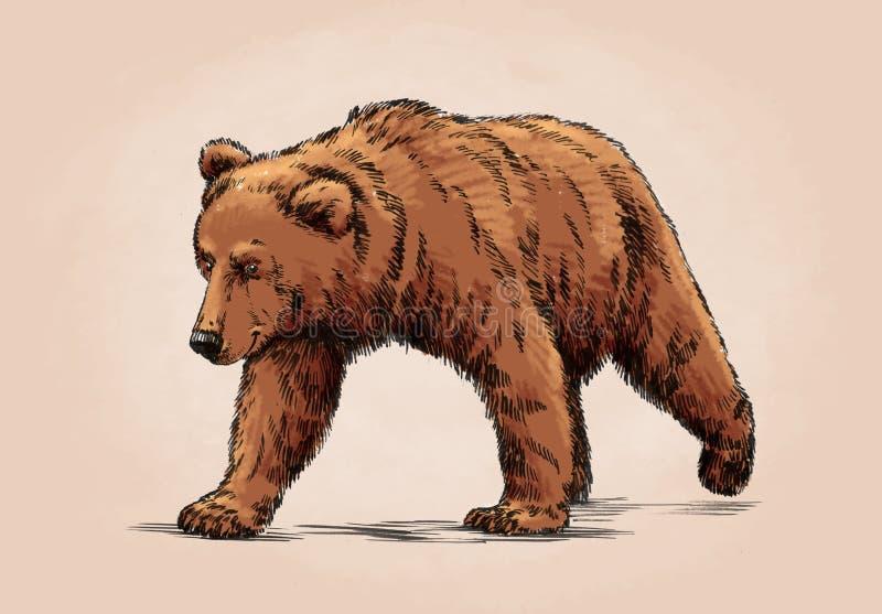 La couleur gravent l'ours gris d'isolement illustration libre de droits