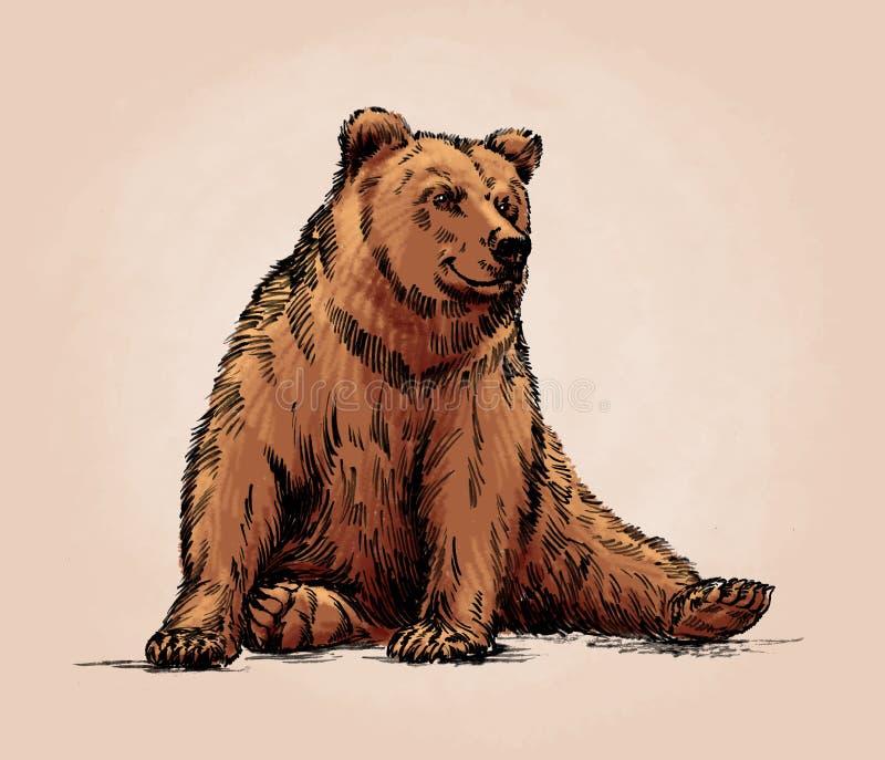 La couleur gravent l'ours gris d'isolement illustration stock
