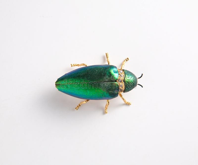 La couleur rouge de l'insecte s'envole dur images libres de droits