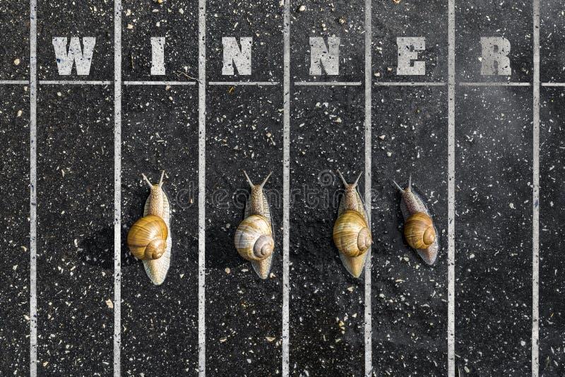 La course d'escargot, près de la ligne d'arrivée, gagnant se connectent la terre images libres de droits