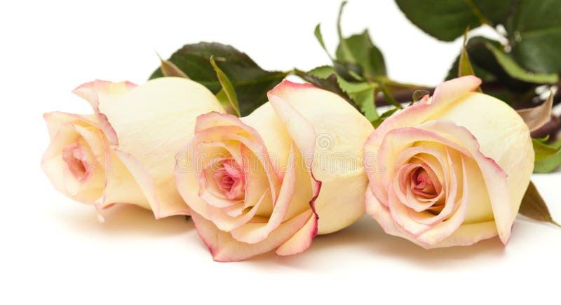 La crème et le rose variés se sont levés photographie stock