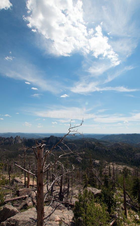 La crête de Harney/élans de noir font une pointe le sentier de randonnée le numéro 9 en Custer State Peak dans le Black Hills du  photographie stock