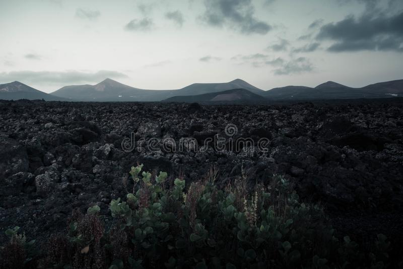 La crassulacee a Lanzarote abbellisce, le isole Canarie, Spagna fotografie stock libere da diritti