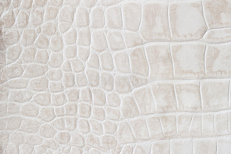 La crema di modo riporta in scala il macro fondo esotico, impresso sotto la pelle di un rettile, coccodrillo Cuoio genuino di str fotografia stock