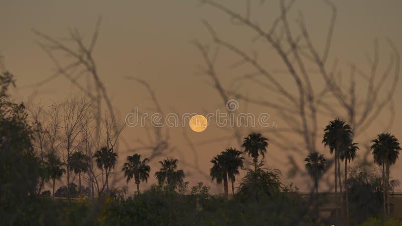 La crepa dell'alba fotografia stock