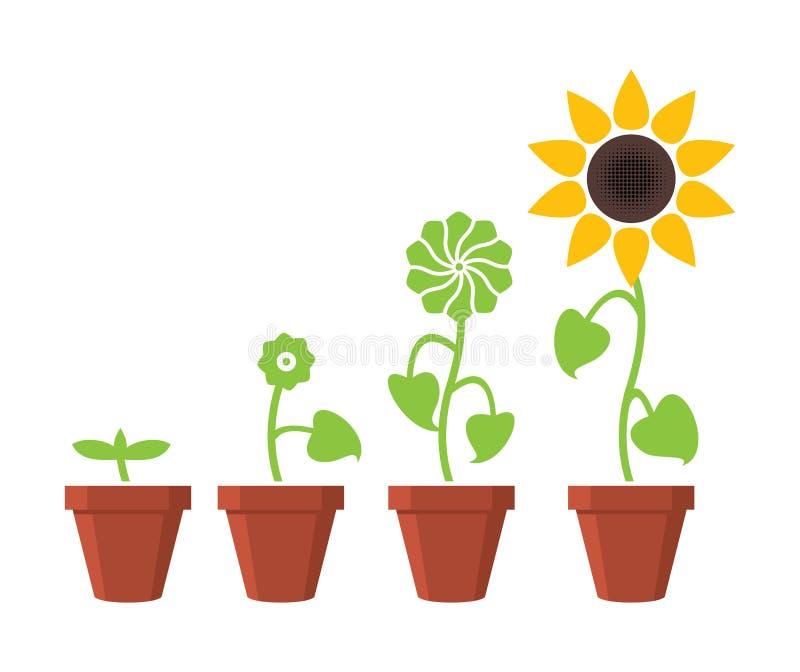 La crescita di pianta del girasole mette in scena il concetto illustrazione vettoriale
