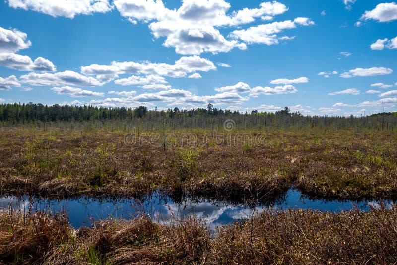 La crique coupe l'avant du paysage d'herbe en dehors de Rhinelander, le Wisconsin photographie stock