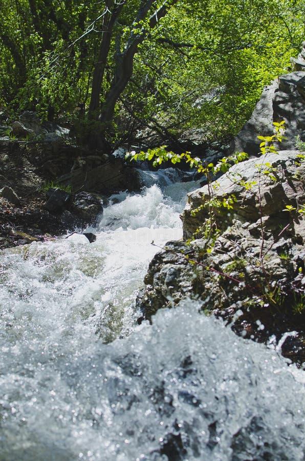 La crique de précipitation sauvage dans la forêt photos libres de droits
