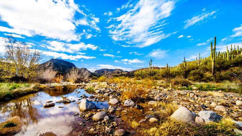 La crique presque sèche de sycomore dans la chaîne de montagne de McDowell en Arizona du nord photo stock