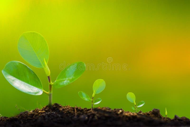 La croissance de l'arbre commence des jeunes plantes au début Le vert jaunâtre peut écrire des lettres photos libres de droits