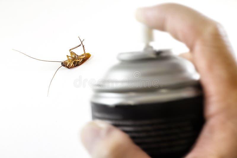 La cucaracha muerta, matada por control de parásito con el espray negro en h fotos de archivo