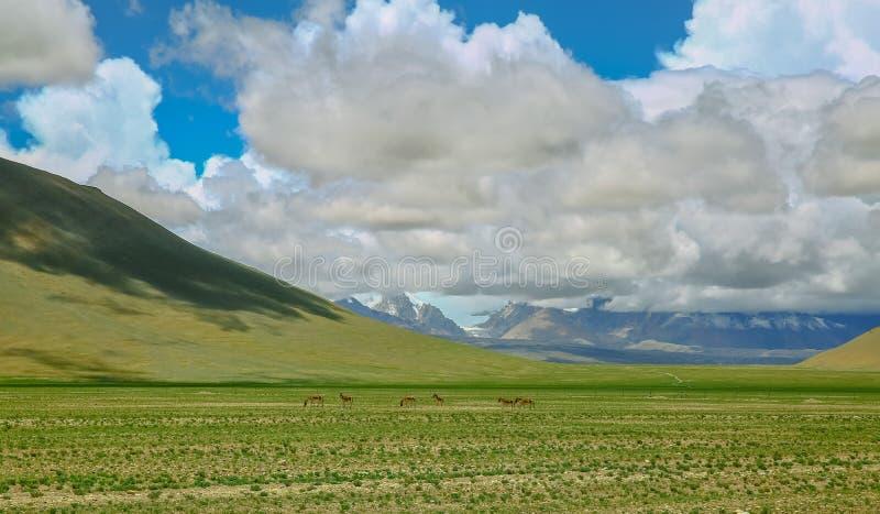 La cuesta del norte del rancho de las montañas de la gama de Himalaya fotografía de archivo