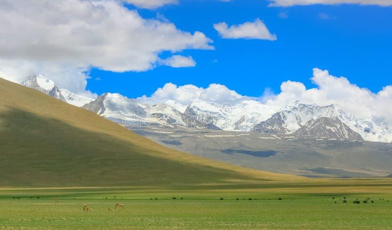 La cuesta del norte del rancho de las montañas de la gama de Himalaya imágenes de archivo libres de regalías