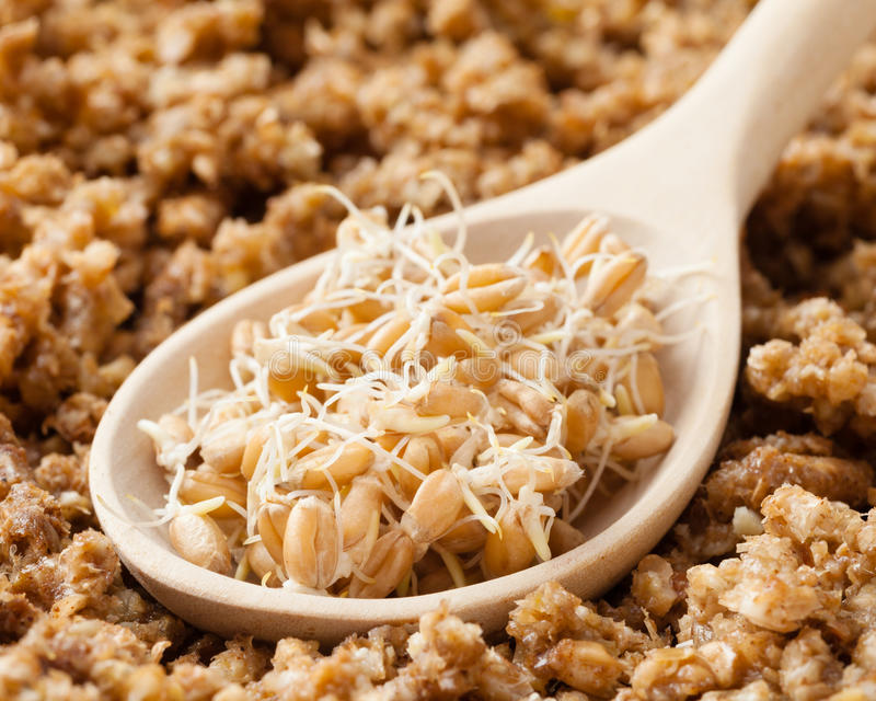 La cuillère en bois avec les pousses et l'au sol de blé a poussé des grains image stock