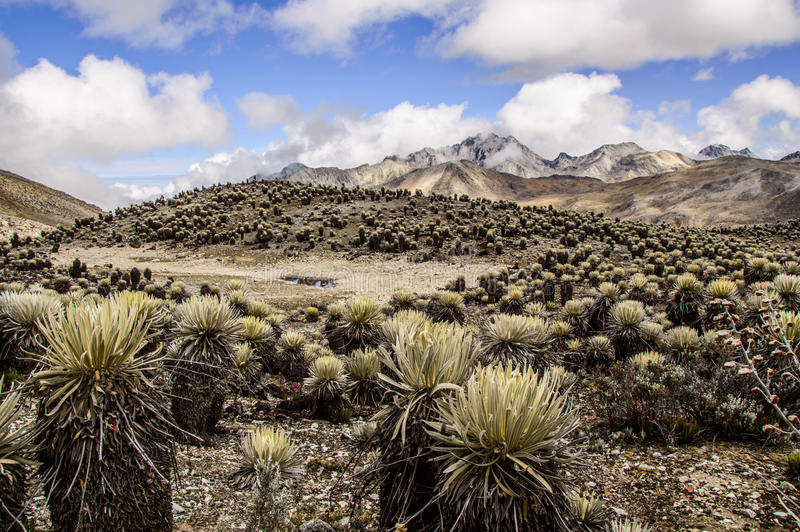 La Culata 5. One of many valleys seen in La Culata National Park stock images