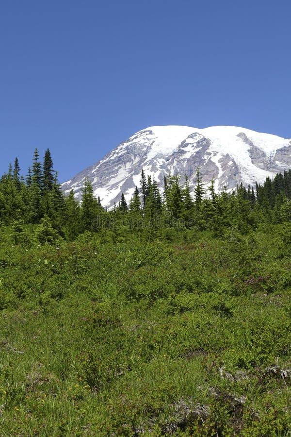 La cumbre del Mt más lluviosa sube sobre las colinas boscosas de la conífera fotografía de archivo