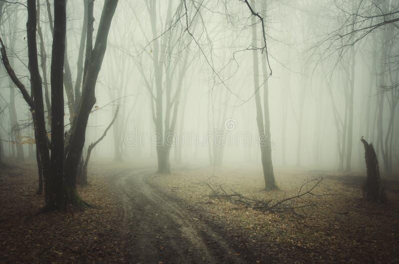 La cuvette de route a hanté la forêt rampante avec le brouillard en automne images libres de droits